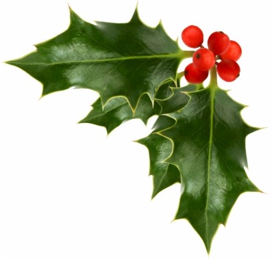 holly branch png at sccpre.cat.