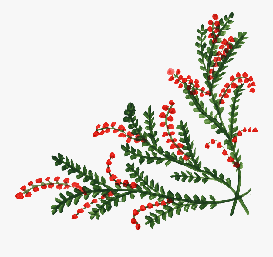 Holly Corner Transparent Png , Free Transparent Clipart.