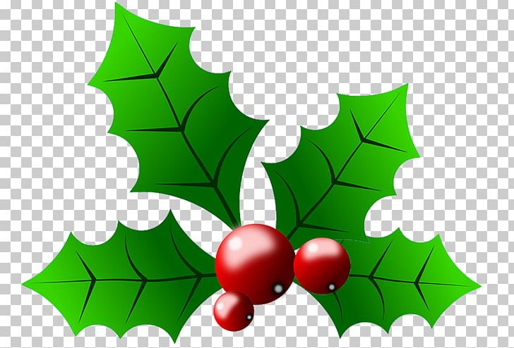 Common Holly Christmas PNG, Clipart, Aquifoliaceae.