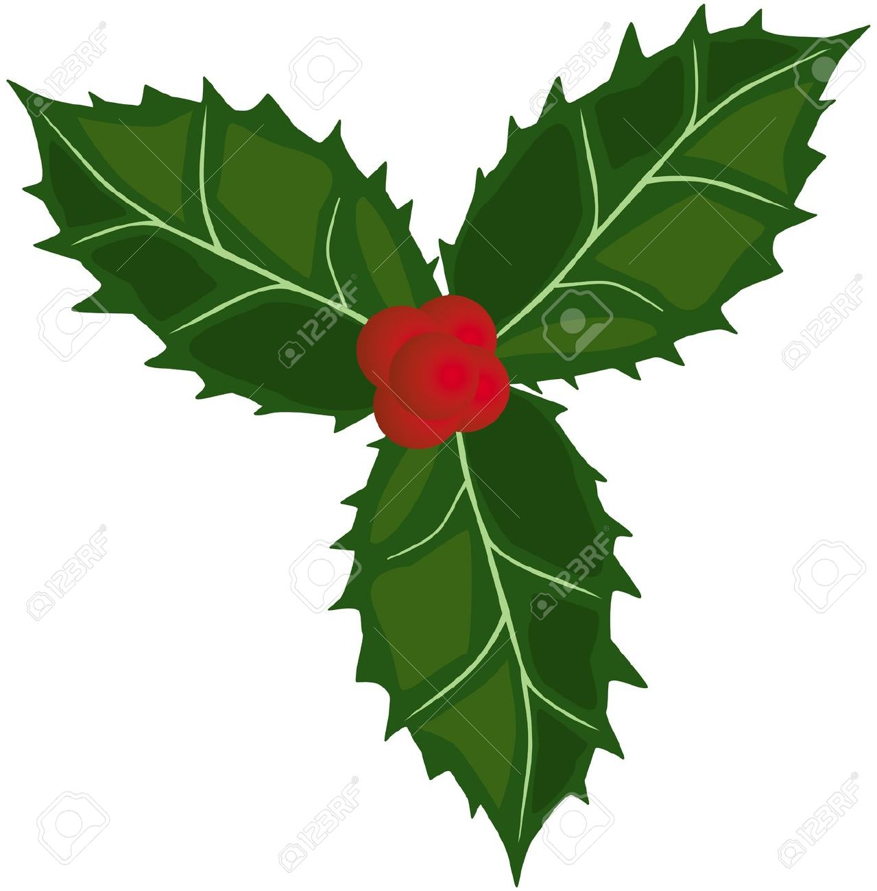 Holly Green Leaves And Red Berries Royalty Free Cliparts, Vectors.