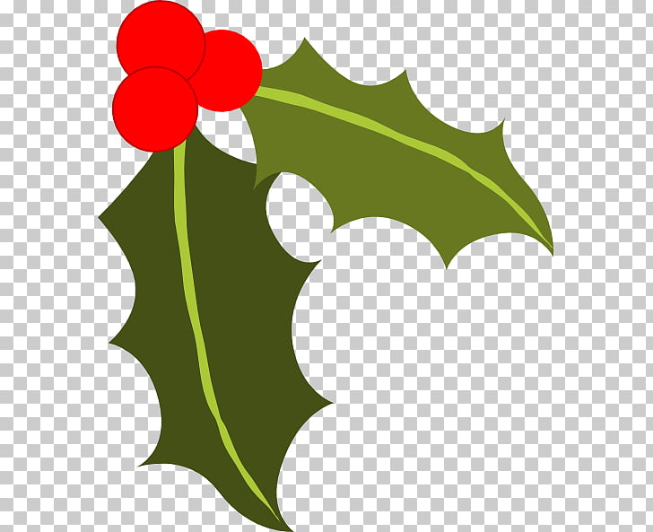 Common holly Berry , Holly Leaves PNG clipart.