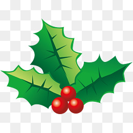 Holly Png, Vector, PSD, And Clipart With #481607.