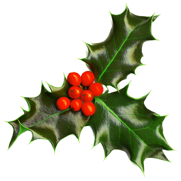Holly Transparent background.