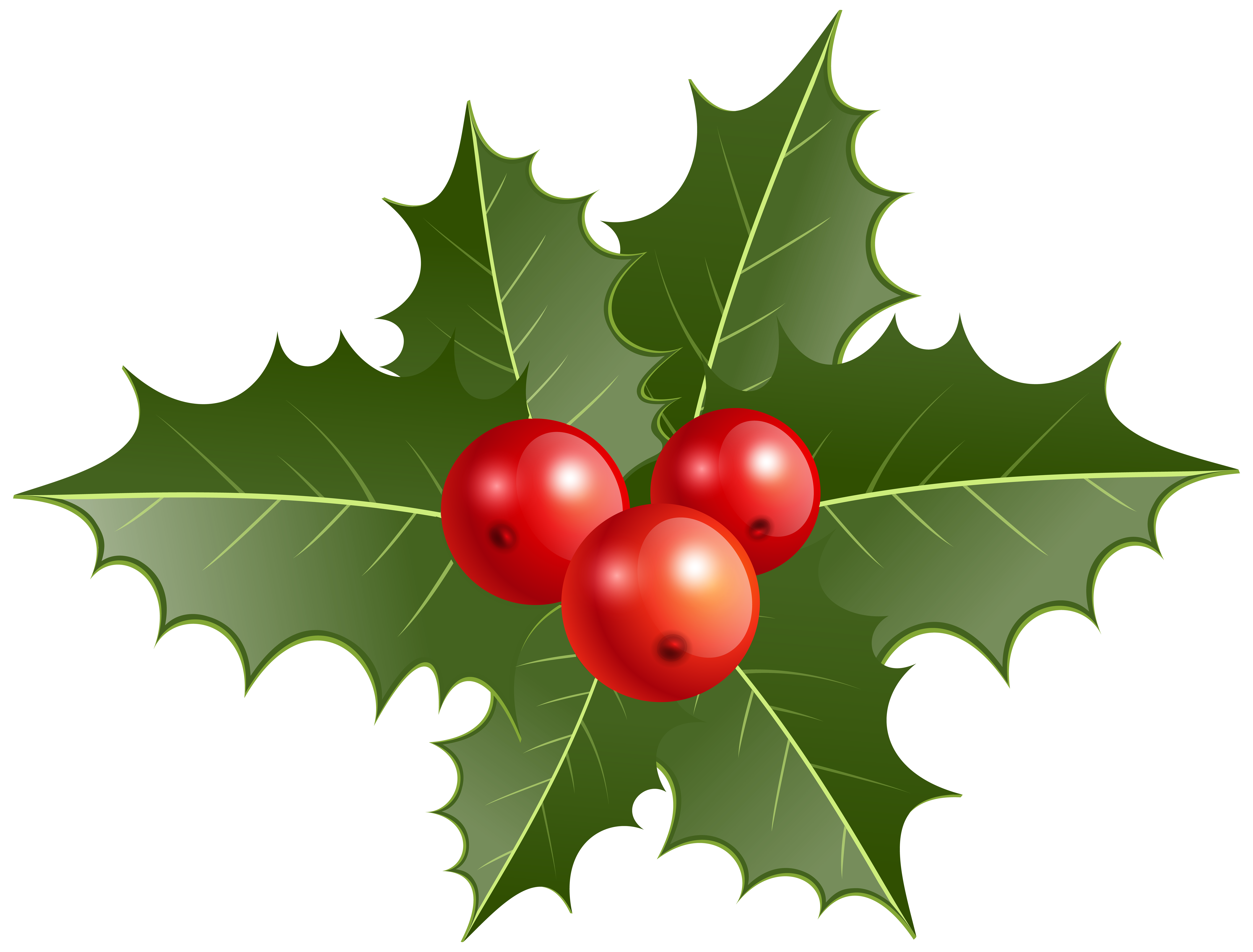 Christmas Holly PNG Clip Art.