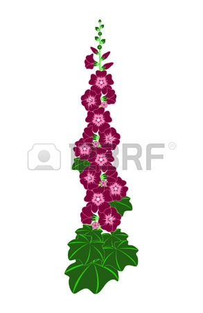 96 Hollyhock Cliparts, Stock Vector And Royalty Free Hollyhock.