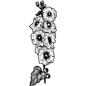 Hollyhock clipart, cliparts of Hollyhock free download (wmf, eps.