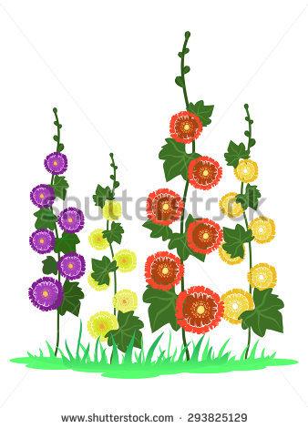 Hollyhock Flower Stock Photos, Royalty.