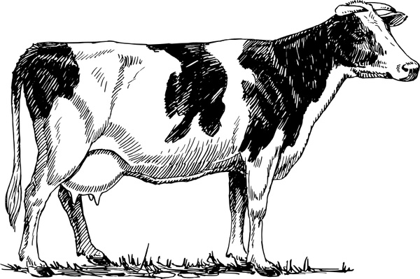 Holstein cow Free vector in Open office drawing svg ( .svg.