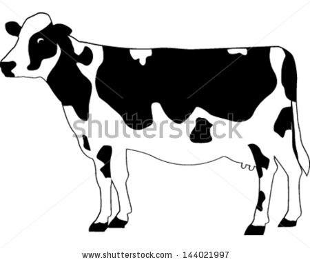 Holstein Cow Stock Images, Royalty.