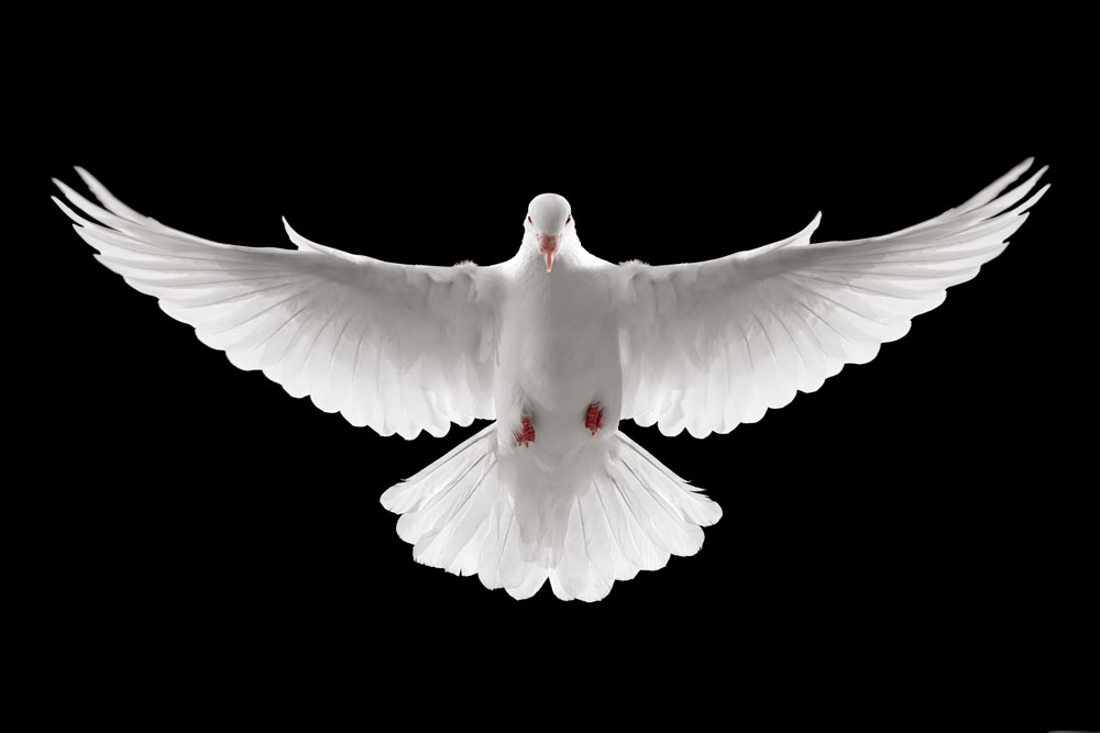 Free Holy Spirit Dove Png, Download Free Clip Art, Free Clip Art on.