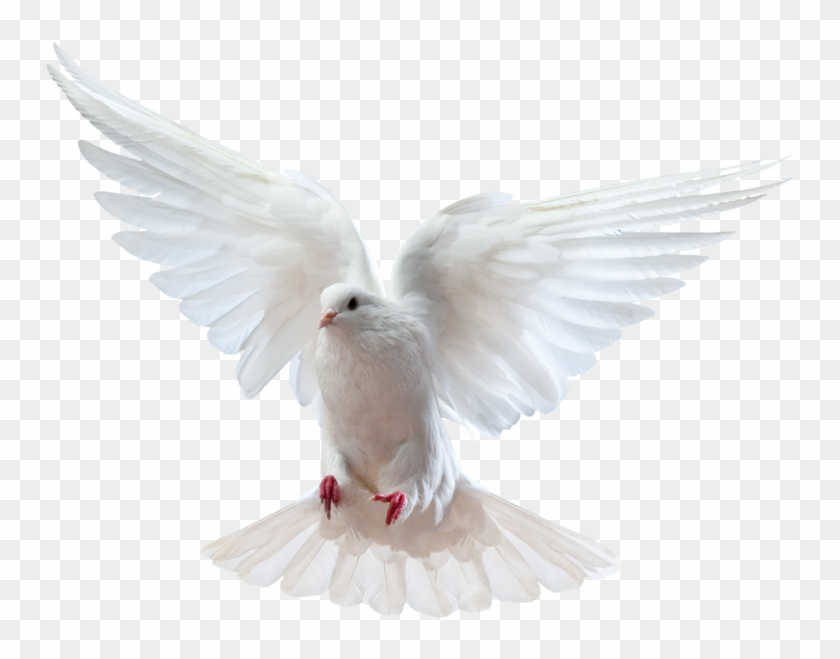 Holy Spirit Dove Png.