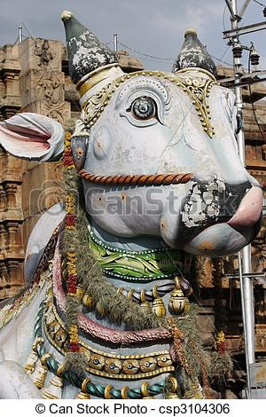 Stock Image of Holy cow in India.