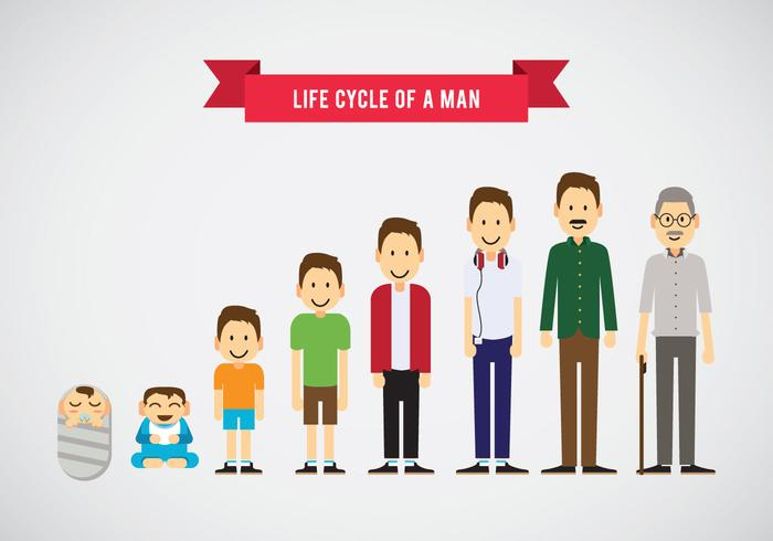 Lifecycle of a Man Vector.