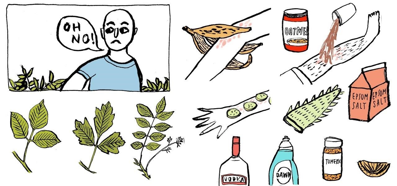 16 Home Remedies for Treating Poison Ivy, Oak, & Sumac Rashes.