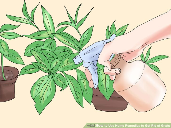 6 Ways to Use Home Remedies to Get Rid of Gnats.