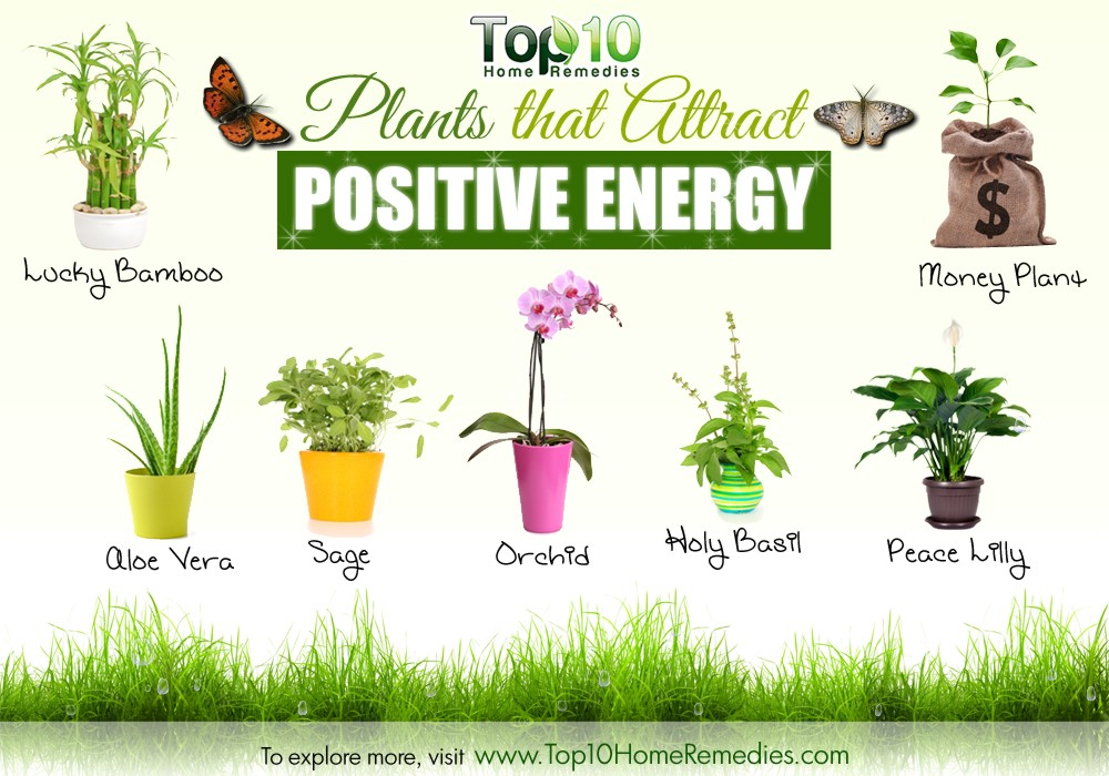 10 Plants that Attract Positive Energy.