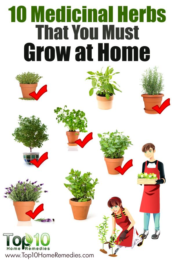 1000+ images about Herbs on Pinterest.