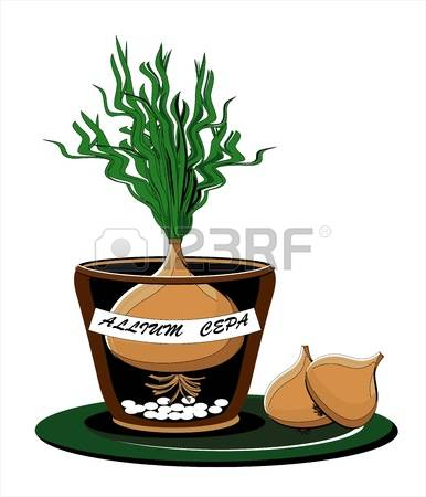 234 Homegrown Stock Vector Illustration And Royalty Free Homegrown.