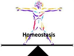 Homeostasis clipart 4 » Clipart Station.