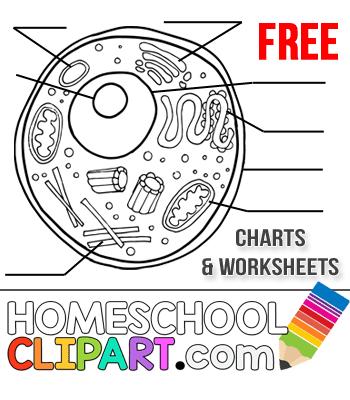 Free Homeschool clipart.