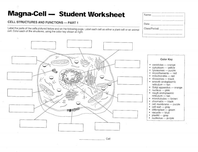 color pages ~ Clipart Animalell Amp Plantoloring Worksheet.