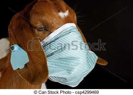 Animals, Clip art and Photos on Pinterest.