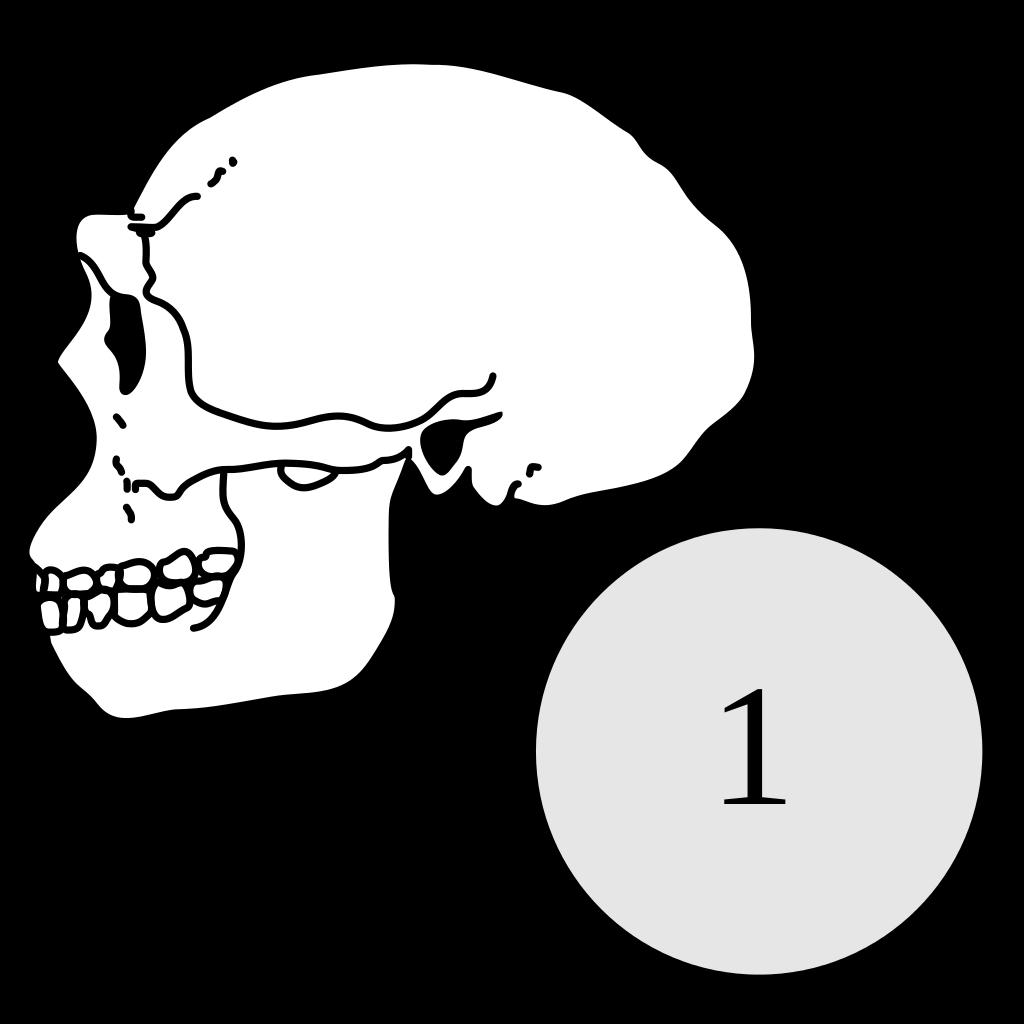 File:Homo erectus.svg.