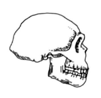 Stock Image of Archaic Homo sapiens.