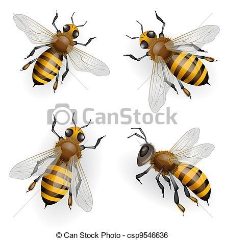 Honeybee Clip Art and Stock Illustrations. 2,667 Honeybee EPS.