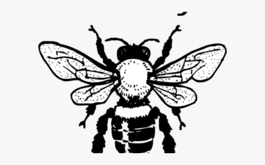 Honey Bee Clipart.