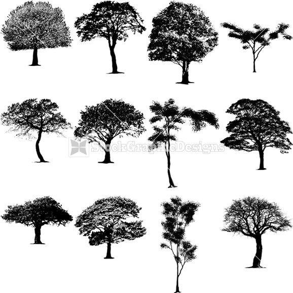 Mesquite Tree Clip Art.