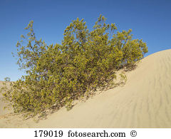 Xerophyt Images and Stock Photos. 16 xerophyt photography and.
