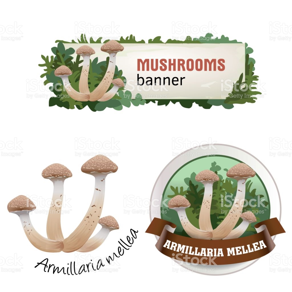 Set Of Mushroom Vector Banner Badge Sticker Icon With Honey.