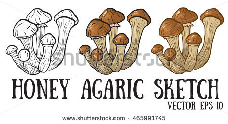 Honey Mushroom Stock Photos, Royalty.