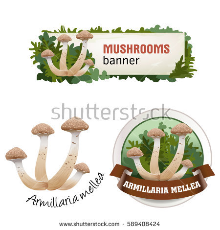 Mushrooms Emblem Stock Photos, Royalty.