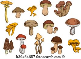 Honey mushroom Clip Art and Illustration. 165 honey mushroom.