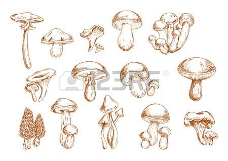 467 Honey Mushrooms Stock Illustrations, Cliparts And Royalty Free.