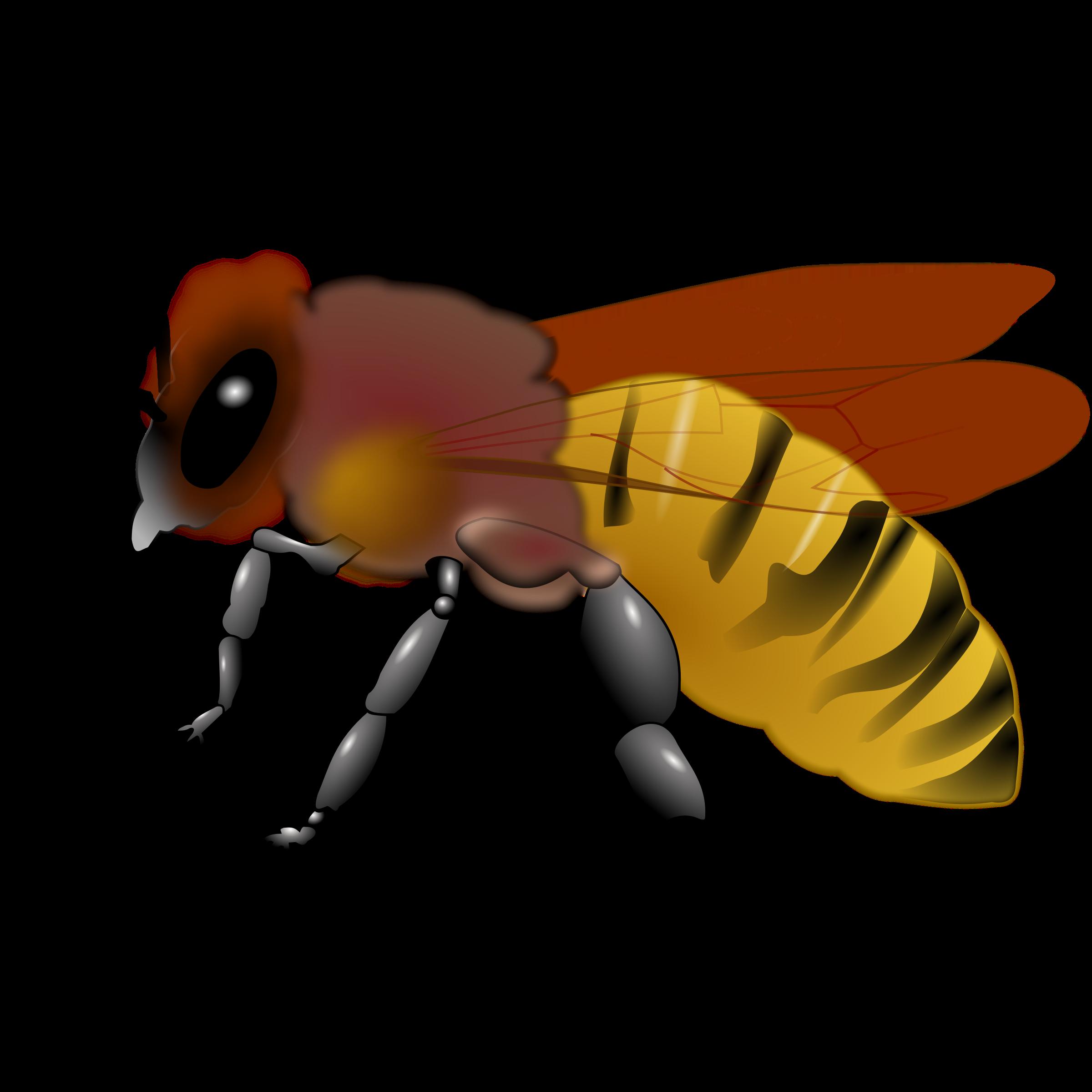 Honeybee Clipart.