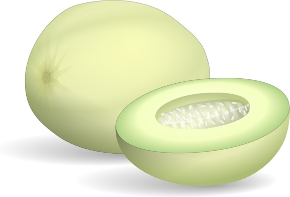 Honeydew Melon clip art Free vector in Open office drawing svg.
