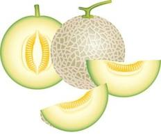 Honeydew Melon clip art Free Vector.