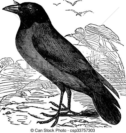 Vector Clipart of Hooded Crow or Hoodiecrow or Corvus cornix.