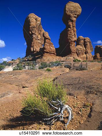 Stock Photography of Hoodoo redrock formations, Mormon tea plant.