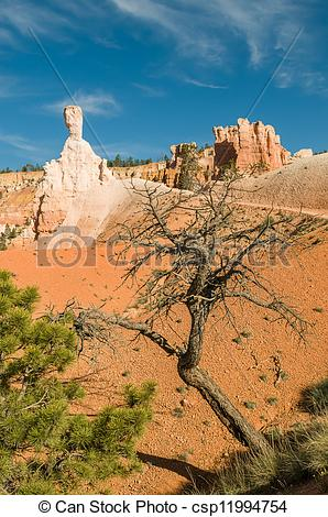 Stock Images of Red pinnacles (hoodoos) of Bryce Canyon, Utah, USA.