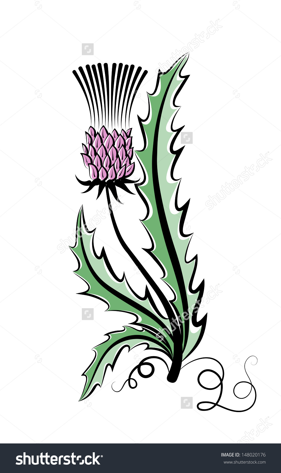 Vector Sketch Color Flower Thistle On Stock Vector 148020176.