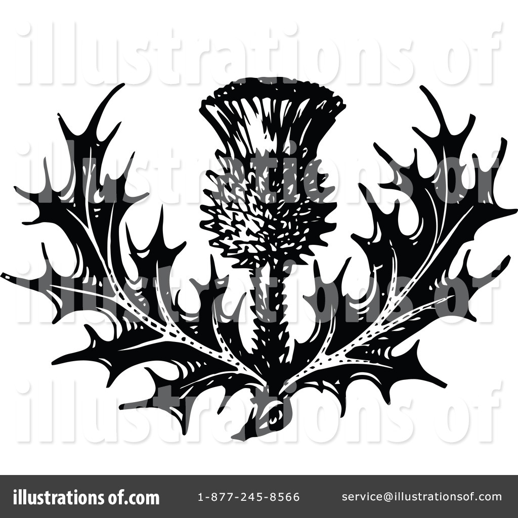 Thistle clipart.
