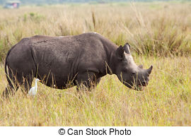 Stock Photography of Black rhino with calf.