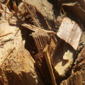 1.5″ Hoop Pine.