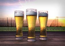 Beer Hop Garden Stock Illustrations.