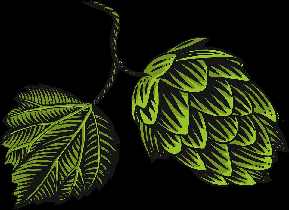 Hop Pine Cone Green.