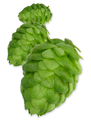 Hops Png & Free Hops.png Transparent Images #28609.